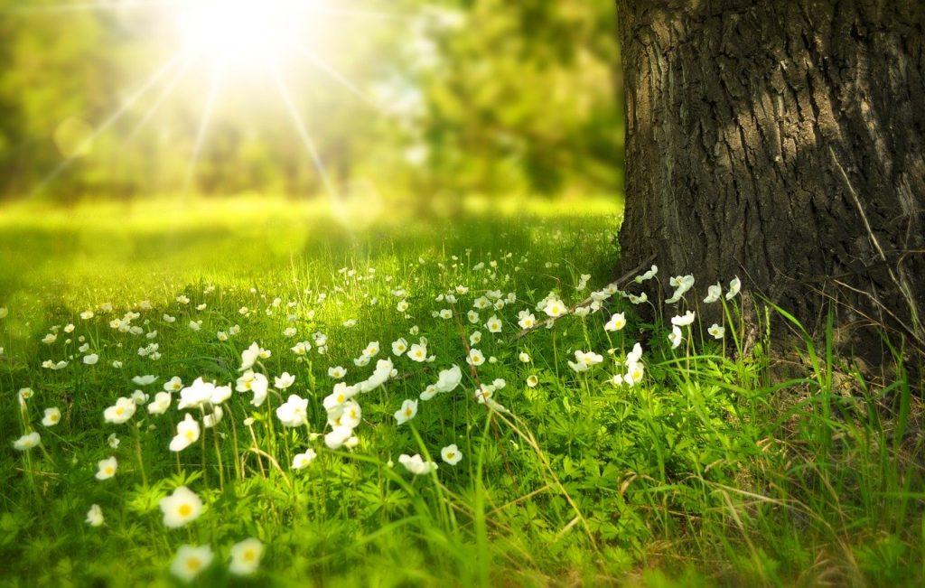 Frühling Garten Blumen Baum