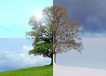 Teichpflege im Winter, Herbst & Frühjahr | Teich pflegen