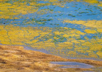 Teich aufsalzen (Anleitung) | Salz für Gartenteich & Fischteich