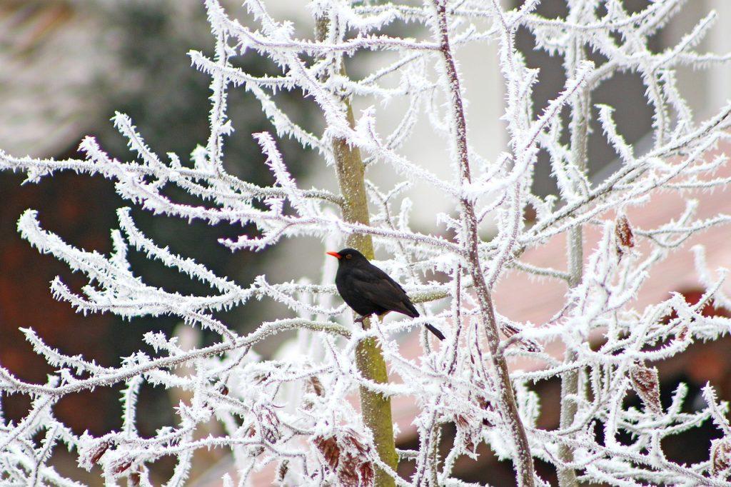 Winter verschneite Äste